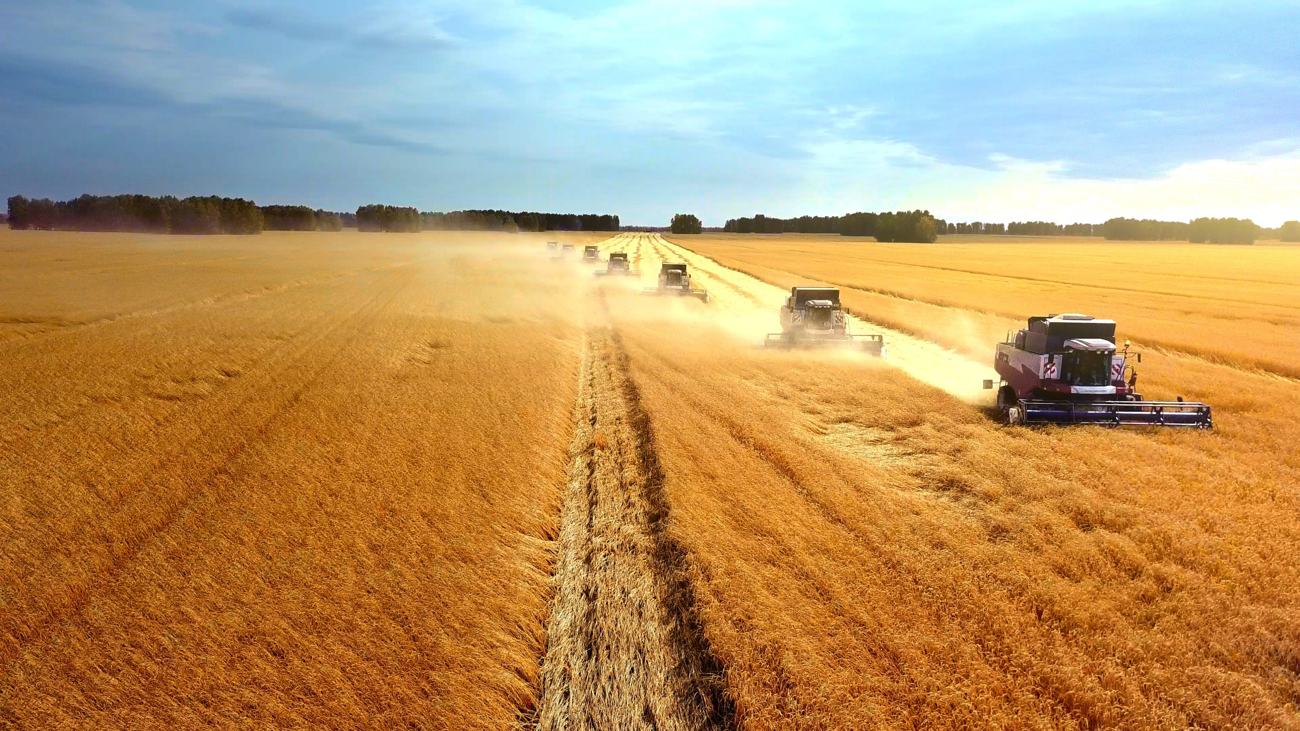 Seven harvesting machines in a diagonal row working in the field